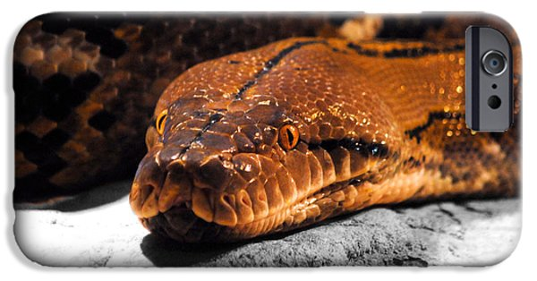 Boa Constrictor iPhone Cases - Boa Constrictor iPhone Case by Jai Johnson
