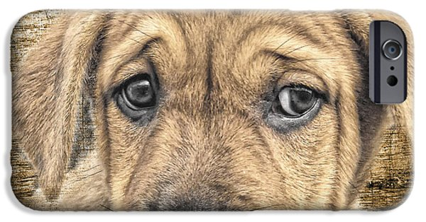 Puppies iPhone Cases - Bob iPhone Case by Lori Frostad