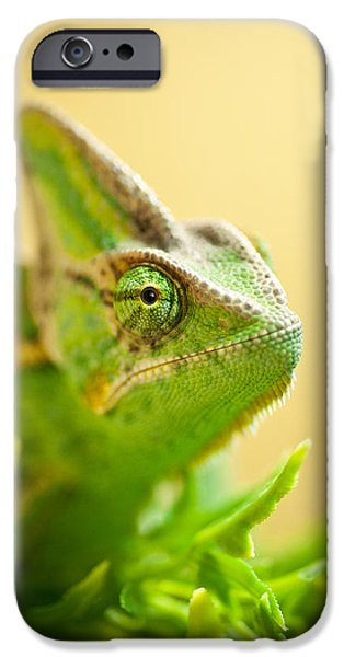 Chameleon iPhone Cases - Bob the Chameleon  iPhone Case by Samuel Whitton