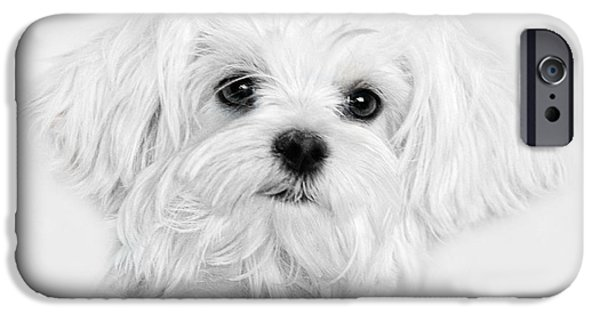 Maltese Puppy iPhone Cases - Bobby White iPhone Case by Joachim G Pinkawa