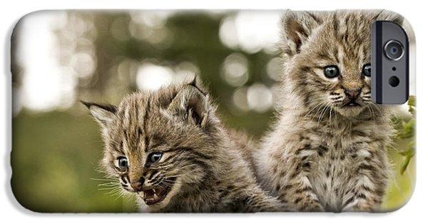 Animals Photographs iPhone Cases - Bobcat - wildlife-image 3 iPhone Case by Wildlife Fine Art