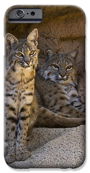 Bobcat 8 iPhone Case by Arterra Picture Library