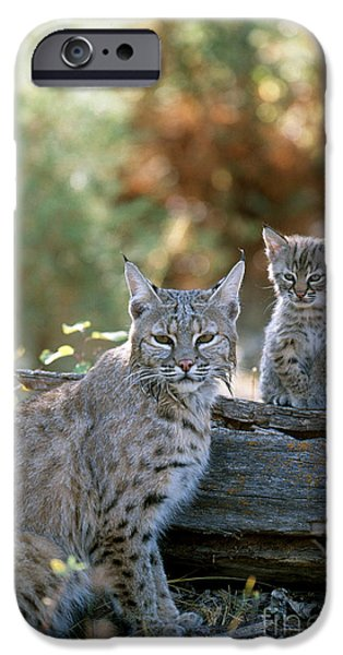 Bob Cats iPhone Cases - Bobcat Adult And Young Lynx Rufus iPhone Case by Art Wolfe