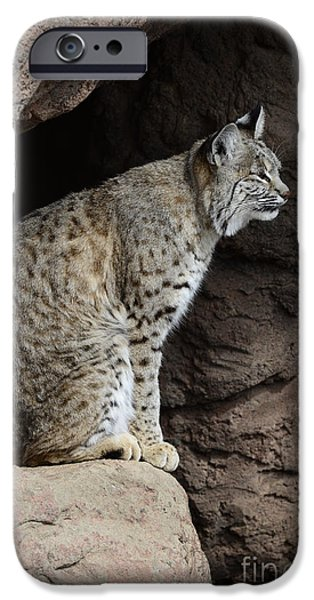 Bob Cats iPhone Cases - Bobcat iPhone Case by Bob Christopher