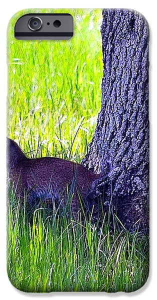 Bobcat cubs iPhone Case by Diana Berkofsky