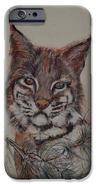 Bobcats Pastels iPhone Cases - Bobcat iPhone Case by Dorothy Campbell Therrien