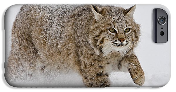 Bobcats Digital iPhone Cases - Bobcat in Snow iPhone Case by Jerry Fornarotto