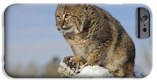 Lynx Rufus iPhone Cases - Bobcat iPhone Case by John Shaw