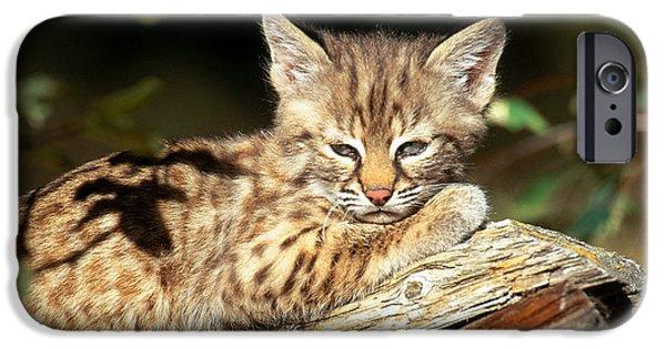 Bob Cats iPhone Cases - Bobcat Kitten Lynx Rufus iPhone Case by Art Wolfe