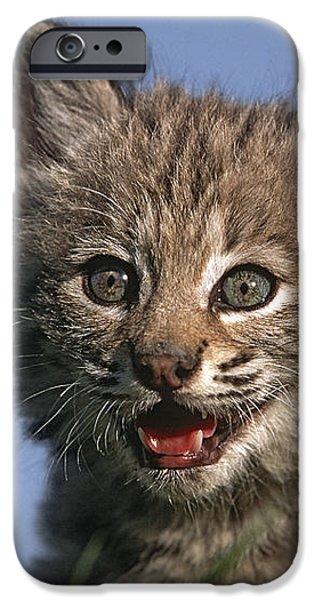 Bobcat Kitten iPhone Case by Tim Fitzharris