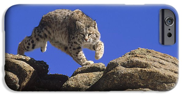 Lynx Rufus iPhone Cases - Bobcat Leaping From Rocks Colorado iPhone Case by Konrad Wothe