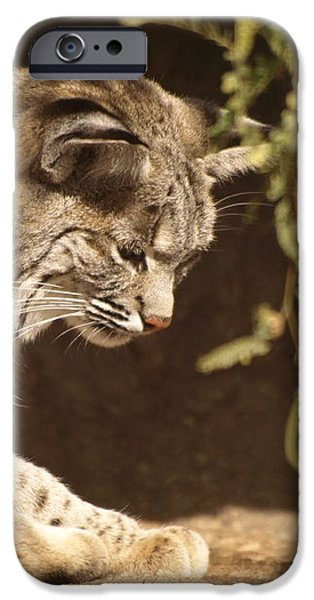 Bobcat iPhone Case by James Peterson