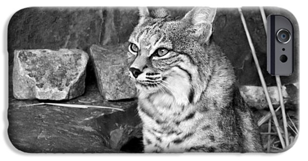 Bobcats Photographs iPhone Cases - Bobcat iPhone Case by Nikolyn McDonald