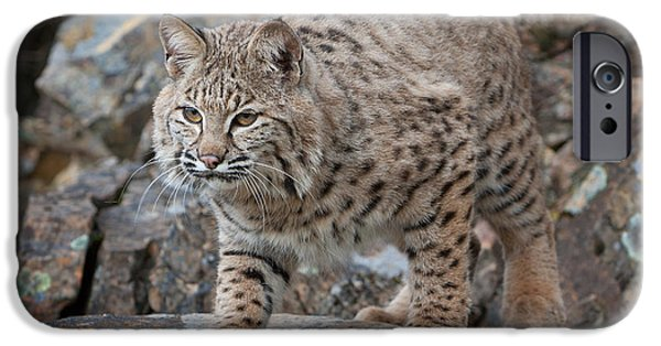 Bobcats Digital iPhone Cases - Bobcat on Rock iPhone Case by Jerry Fornarotto