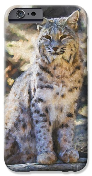 Bobcats Digital iPhone Cases - Bobcat Digital Painting iPhone Case by Dianne Phelps