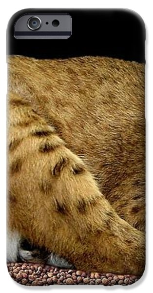 Bobcat iPhone Case by Rose Santuci-Sofranko