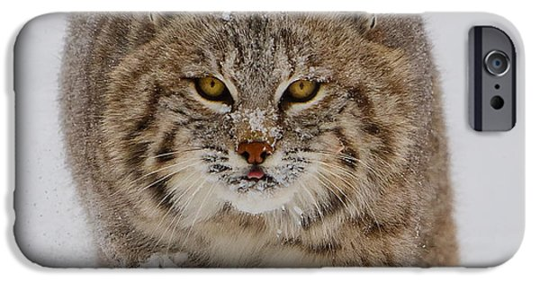 Bobcats Digital iPhone Cases - Bobcat Running Forward iPhone Case by Jerry Fornarotto
