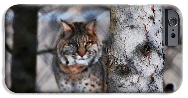 Bobcats Mixed Media iPhone Cases - Bobcat iPhone Case by StudioBoldt   Photography