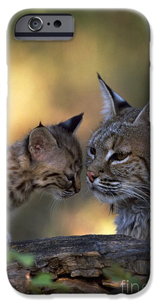 Bobcat And Kittens iPhone Cases - Bobcat With Kitten iPhone Case by Art Wolfe