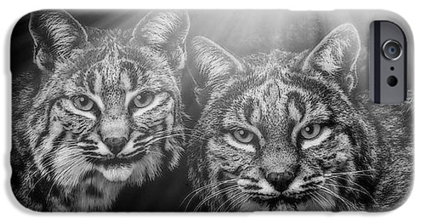 Bobcats Mixed Media iPhone Cases - Bobcats iPhone Case by Elaine Malott