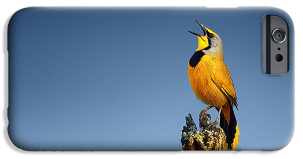 Little iPhone Cases - Bokmakierie bird calling iPhone Case by Johan Swanepoel