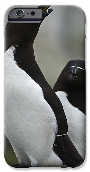 Razorbill iPhone Cases - Bonded for Life... iPhone Case by Nina Stavlund