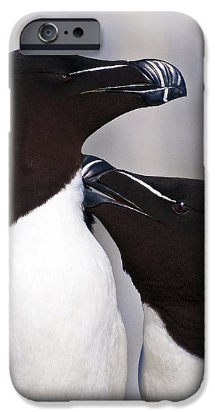 Sea Birds iPhone Cases - Bonding.. iPhone Case by Nina Stavlund