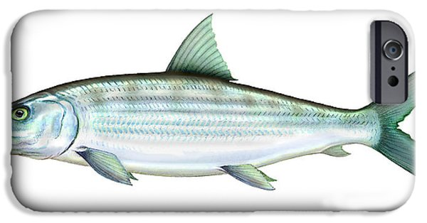 Permit iPhone Cases - Bonefish iPhone Case by Charles Harden