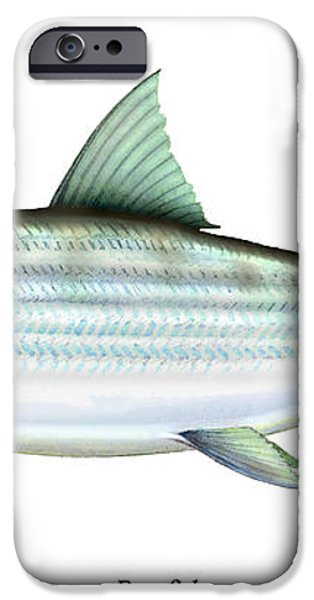 Bonefish iPhone Case by Charles Harden
