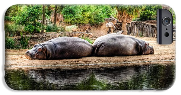 Hippopotamus iPhone Cases - Book Ends iPhone Case by Ray Warren