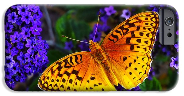 Best Sellers -  - Floral Digital Art Digital Art iPhone Cases - Boothbay Butterfly iPhone Case by Bill Caldwell -        ABeautifulSky Photography
