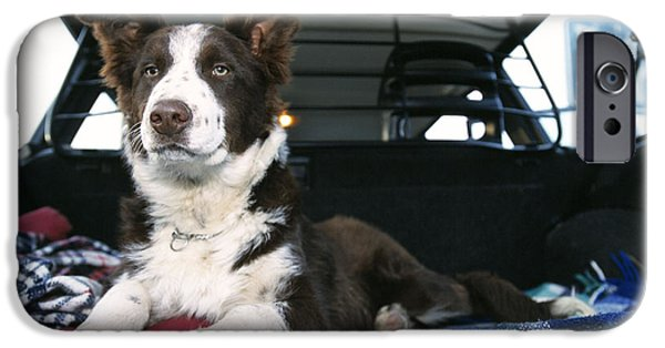 Pet Care iPhone Cases - Border Collie In Car iPhone Case by Johan De Meester
