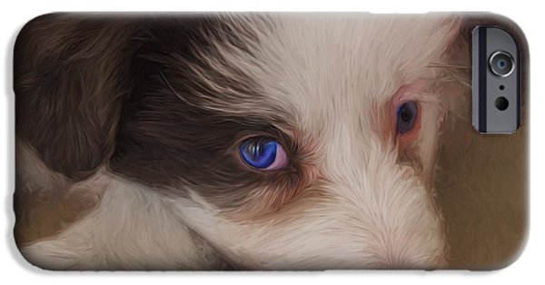 Puppies iPhone Cases - Border collie puppy iPhone Case by Sheila Smart