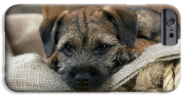 Dog Close-up iPhone Cases - Border Terrier Puppy Dog iPhone Case by John Daniels