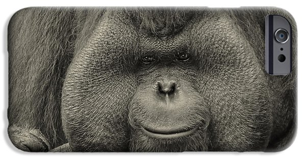 Ape iPhone Cases - Bornean Orangutan II iPhone Case by Lourry Legarde
