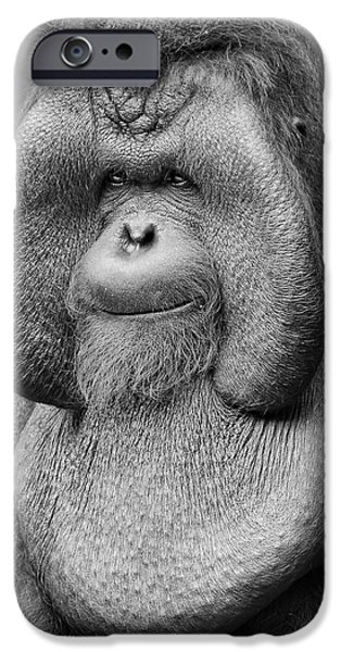 Ape iPhone Cases - Bornean Orangutan III iPhone Case by Lourry Legarde