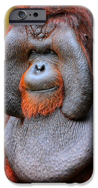 Ape iPhone Cases - Bornean Orangutan IV iPhone Case by Lourry Legarde