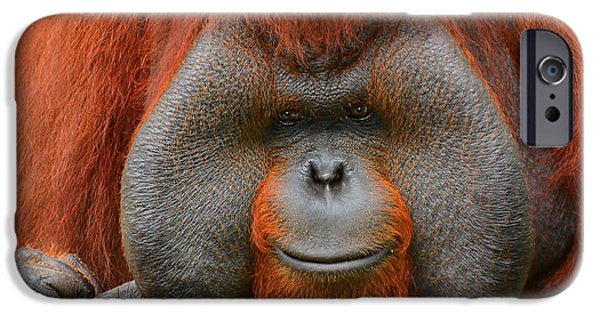Ape iPhone Cases - Bornean Orangutan iPhone Case by Lourry Legarde