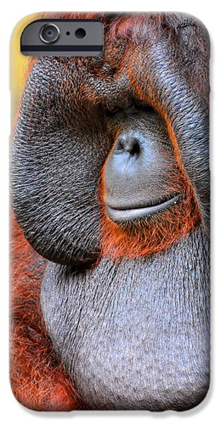 Ape iPhone Cases - Bornean Orangutan VI iPhone Case by Lourry Legarde