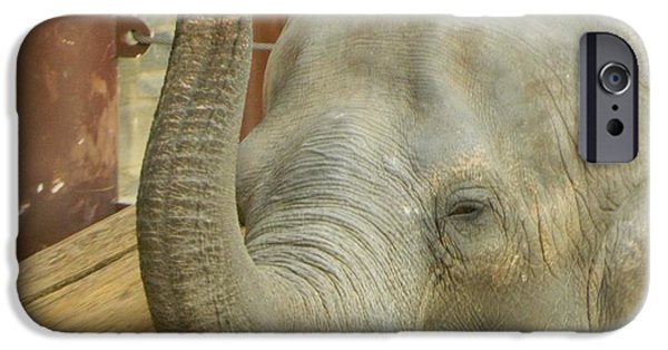 Smithsonian iPhone Cases - Bozie The Elephant iPhone Case by Emmy Marie Vickers