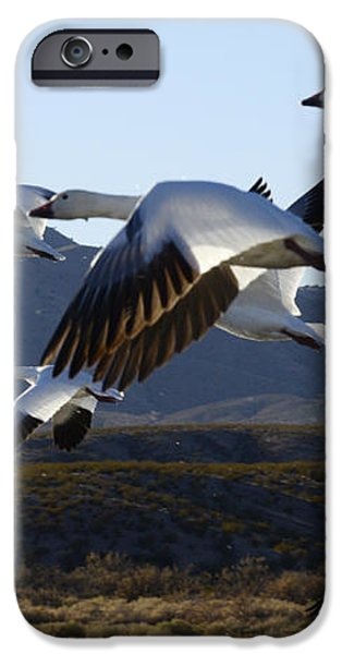 Bosque Del Apache Snow Geese In Flight iPhone Case by Bob Christopher