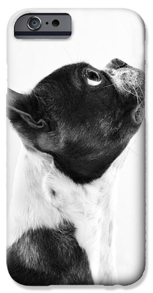 Puppies iPhone Cases - Boston Profile iPhone Case by Stephanie Sherman