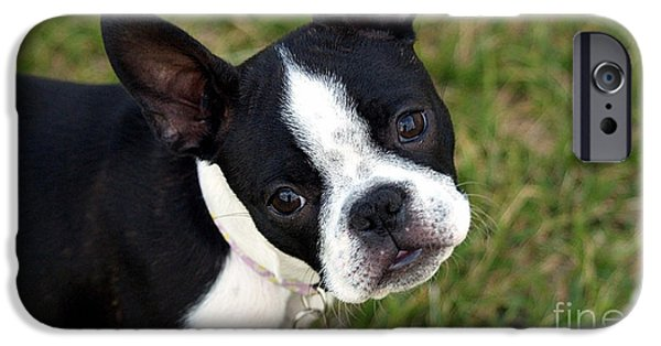 Dog iPhone Cases - Boston Terrier Puppy iPhone Case by Marvin Blaine