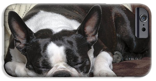 Dog Close-up iPhone Cases - Boston Terrier Sleeping iPhone Case by Jean-Michel Labat