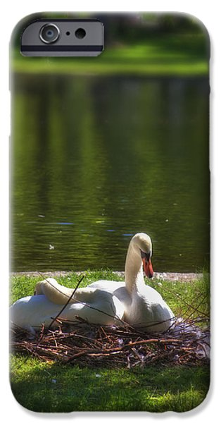 City. Boston iPhone Cases - Bostons Romeo and Juliet Swans iPhone Case by Joann Vitali