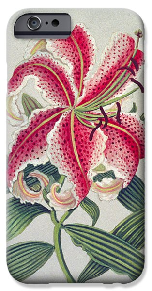 Stamen iPhone Cases - Botanical Lily, 1996 Wc On Paper iPhone Case by Lillian Delevoryas
