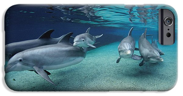 Recently Sold -  - Fauna iPhone Cases - Bottlenose Dolphins In Shallow Water iPhone Case by Flip Nicklin
