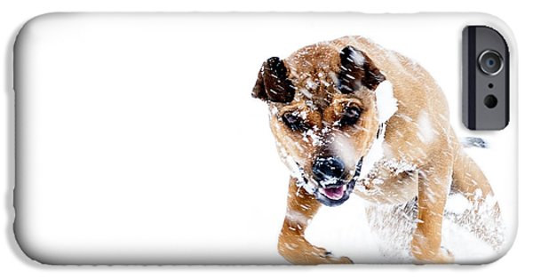 Rottweiler Puppy iPhone Cases - Bounding in Snow iPhone Case by Thomas R Fletcher