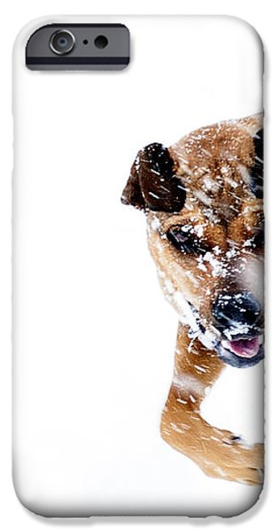 Bounding in Snow iPhone Case by Thomas R Fletcher