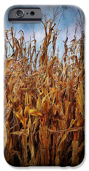 Julie Dant Artography iPhone Cases - Bountiful Harvest iPhone Case by Julie Dant